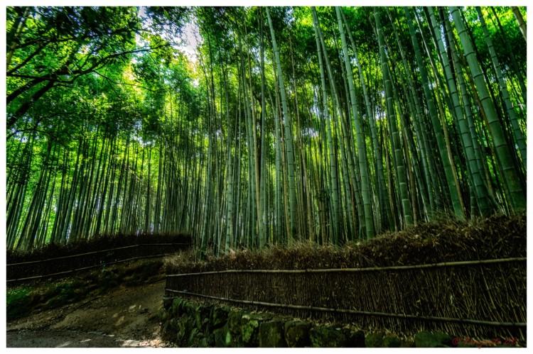 Arashiyama-1-7 (Large)