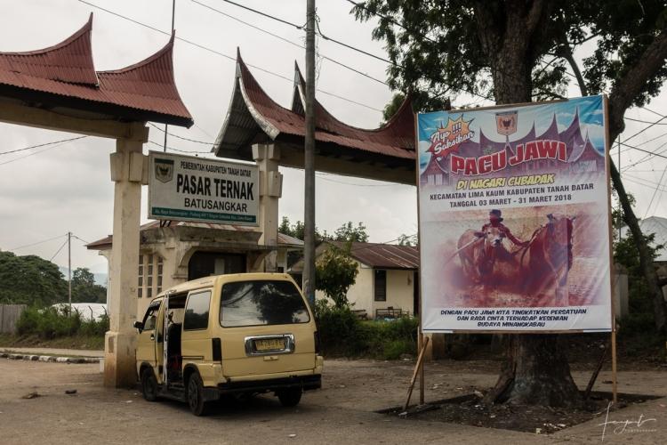 Pacu Jawi Batusangkar Sumatera Barat