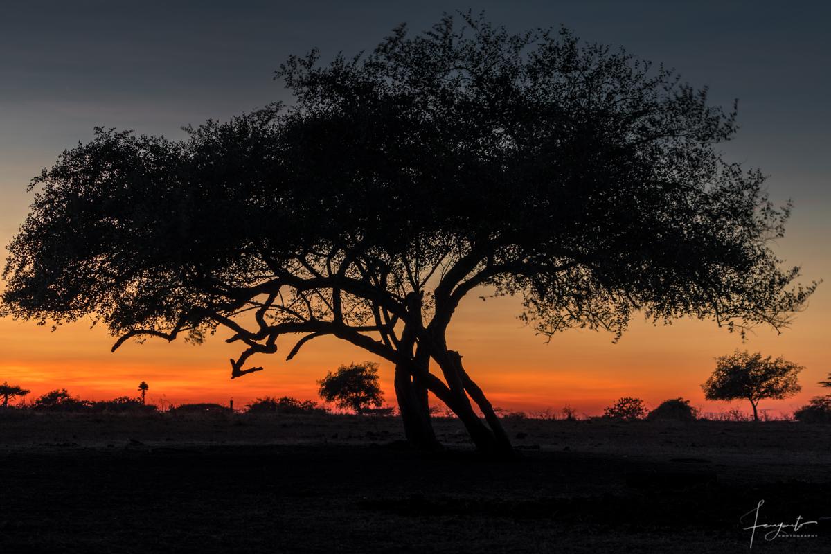 Matahari Terbit bisa juga di lihat dari Savana Bekol.
